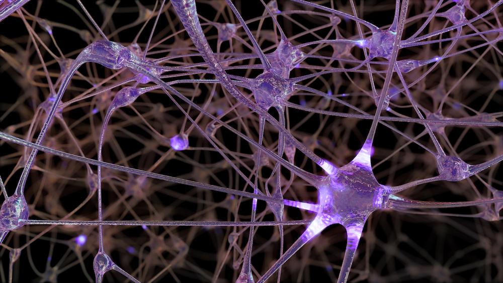 医学博士に聞く、記憶力・学習力アップに影響する脳機能 ...